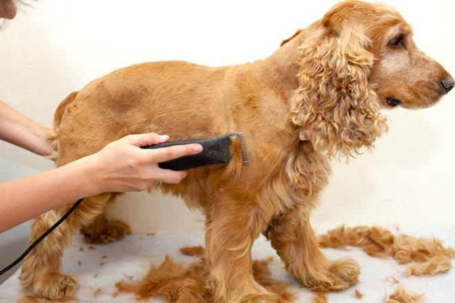 Лучшие машинки для стрижки собак