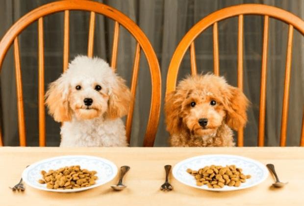 Лучшие сухие корма для собак