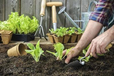 Лучшие грунты для растений