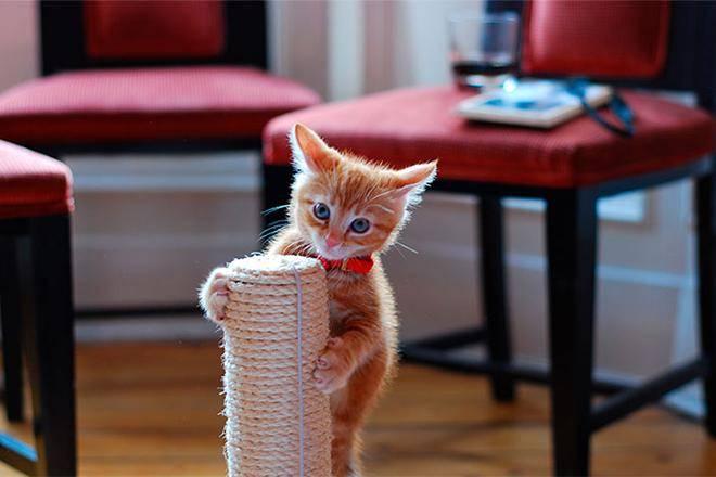 Лучшие когтеточки для кошек