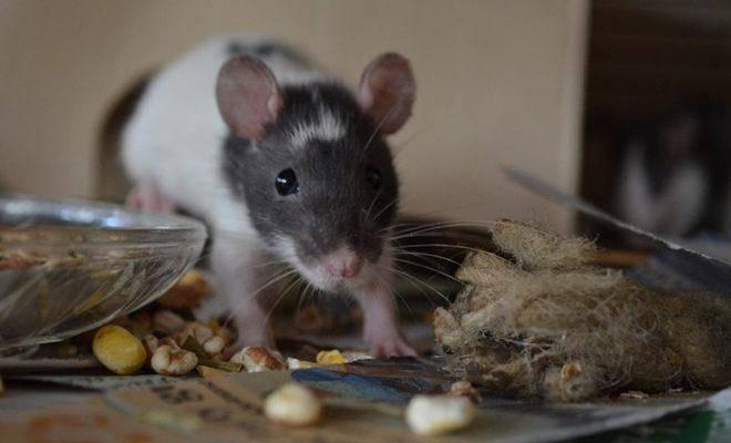 Лучшие отпугиватели мышей