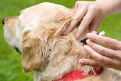 Лучшие капли от клещей для собак
