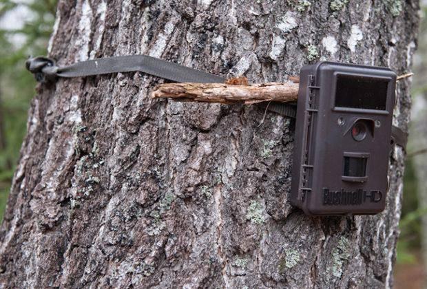 Лучшие фотоловушки для охоты