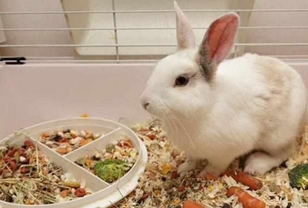 Лучшие-корма-для-кроликов
