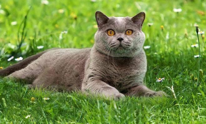 Лучшие породы кошек