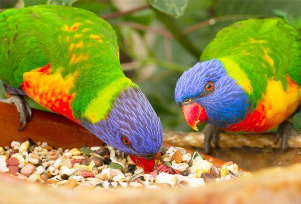 Лучшие корма для попугаев