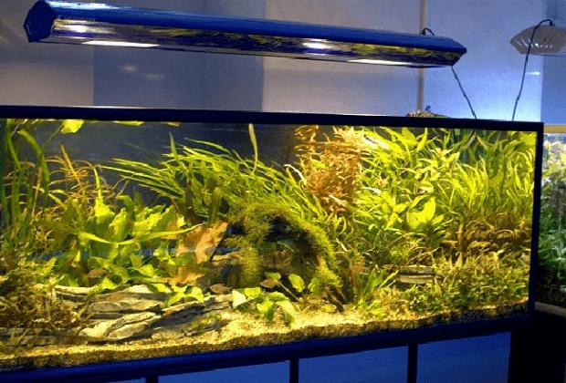 Лучшие лампы для аквариума