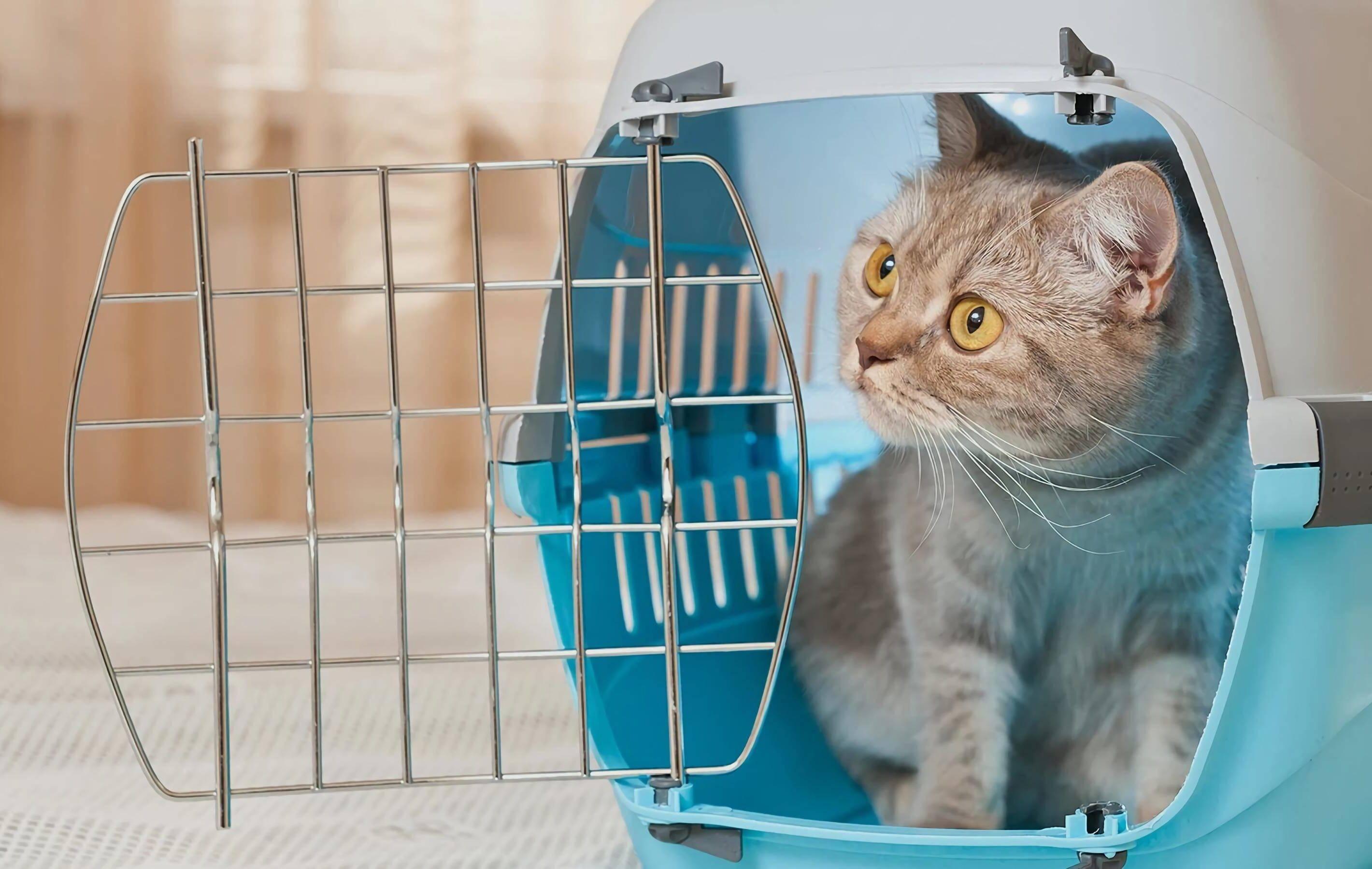 лучшие переноски для кошек