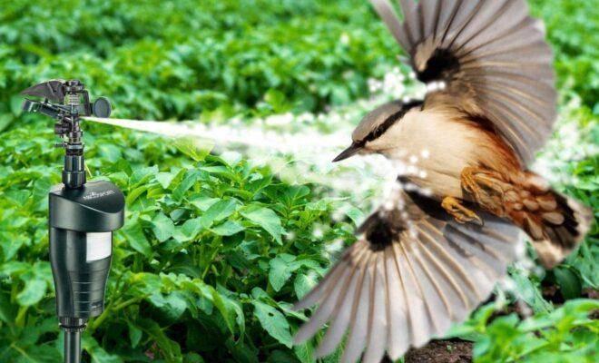 Лучшие отпугиватели птиц